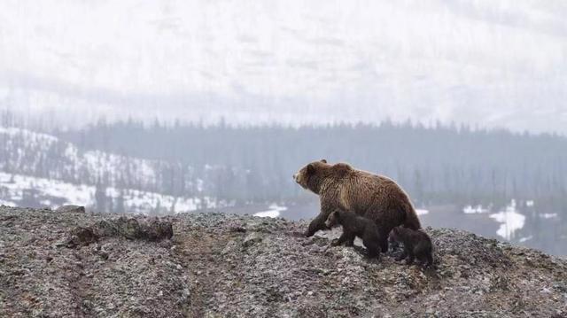 冬季宛如仙境一样的地方你知道几个?冬游美国黄石公园