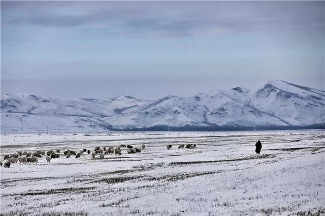 """玩出冬季新花样丨超""""靓""""的北疆摄影之旅,你不来吗?"""