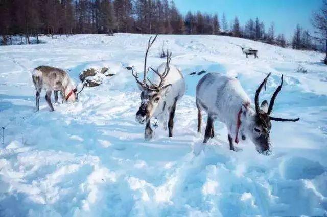 """这个""""中国小瑞士""""!阿尔山冬季美景媲美北欧,不输北海道"""