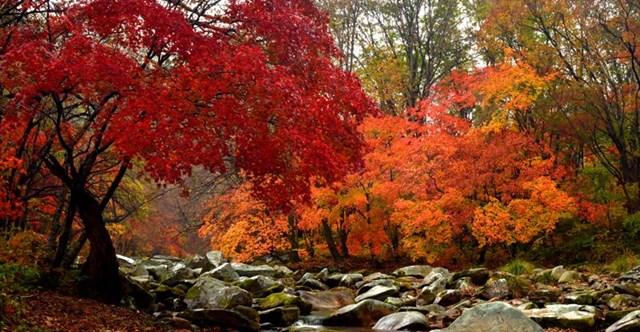本溪枫叶哪个景点好?