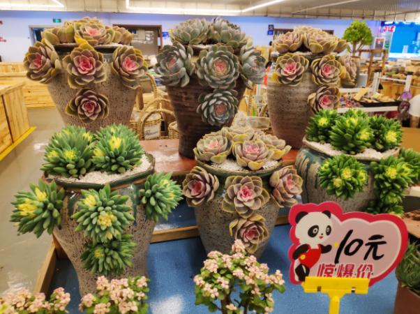 云南最大鲜花市场斗南镇,鲜花论斤卖,一秒踏入春天