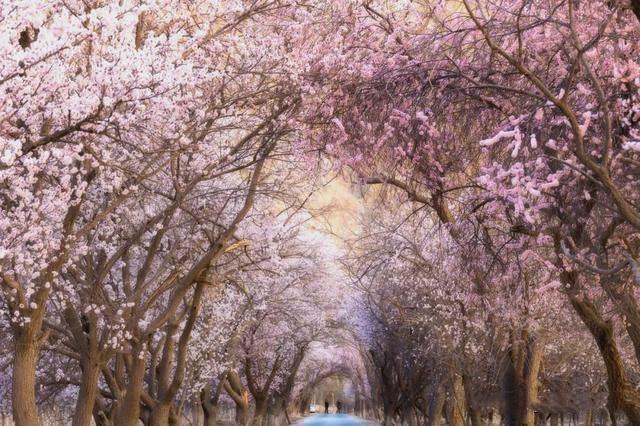 """020年国内最佳看花旅行地!这个春天,陪我去看花可好?"""""""