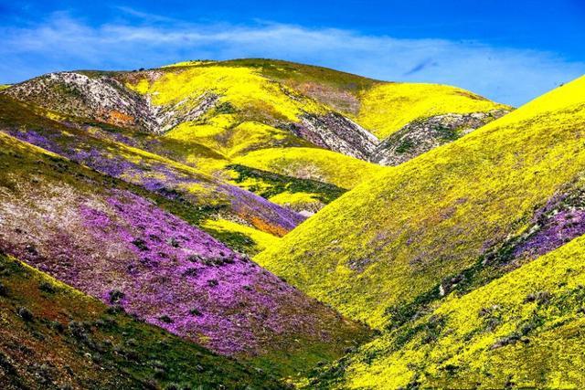 """020加州花海旅游,带你畅游一望无际的野花之海"""""""
