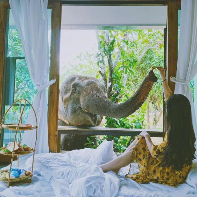 在清迈享受山间精灵的叫醒服务——大象营地民宿