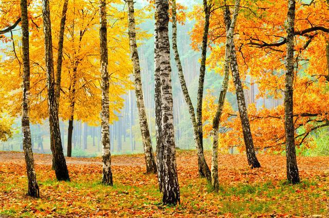 新疆旅游最佳季节?几月来新疆最美