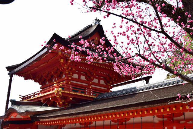 除了小鹿,奈良上镜的10个旅行景点以及美食(奈良旅游必去景点推荐)