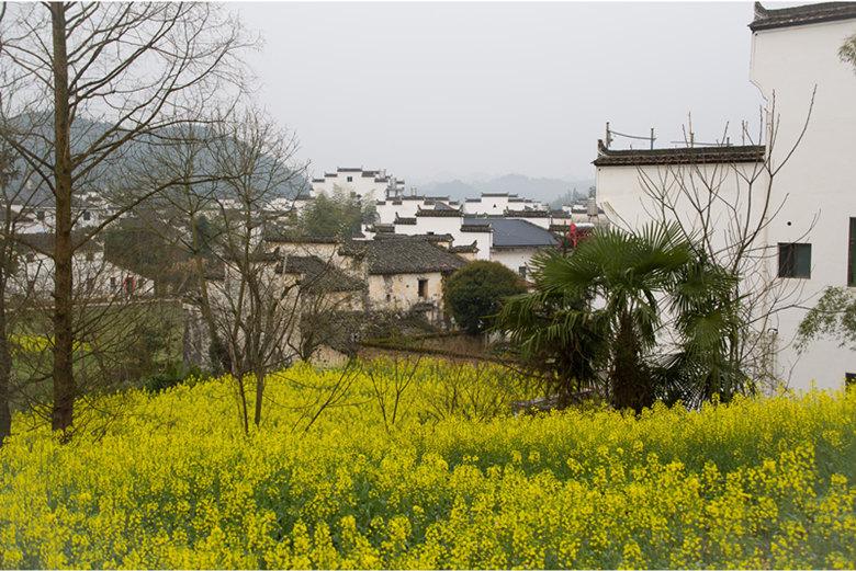 婺源查平坦村游玩攻略,欣赏油菜花中的天上人家